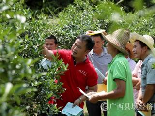 广西融安:技术指导员助力脱贫攻坚