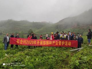 乐业县同乐镇猕猴桃产业园进入管护季,稳固贫困户增收