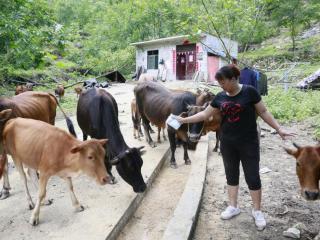 环江川山镇洞敢村:壮大村集体经济 助推产业发展
