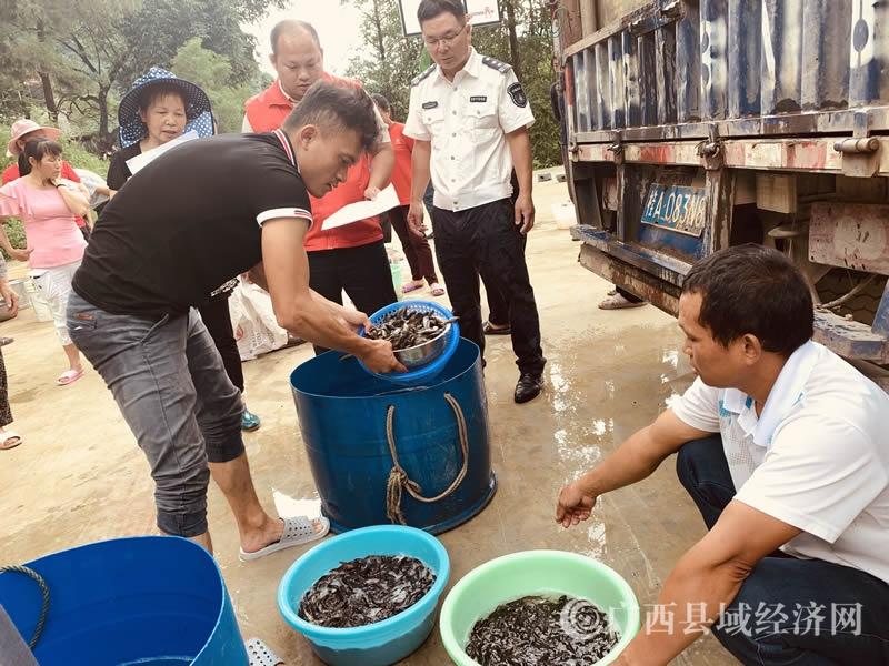 环江龙水村:种米养鱼助增收