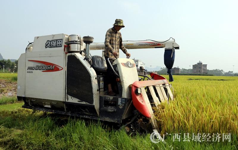 平桂区鹅塘镇卢岗村:水稻喜获丰收