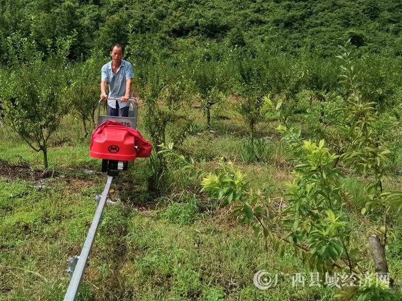 """恭城:果園開來""""小火車"""""""