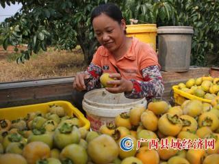 月柿好甜!您正好有空的话可以来恭城尝鲜了!