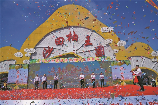 2020年容县沙田柚文化旅游节开幕――金果压枝头 柚香飘千里