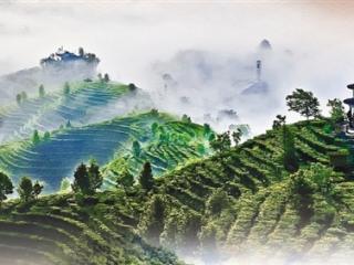 百色市:文化塑灵魂 旅游振乡村
