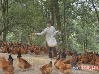"""宁明县:写活""""林业""""大文章  助力群众奔小康"""