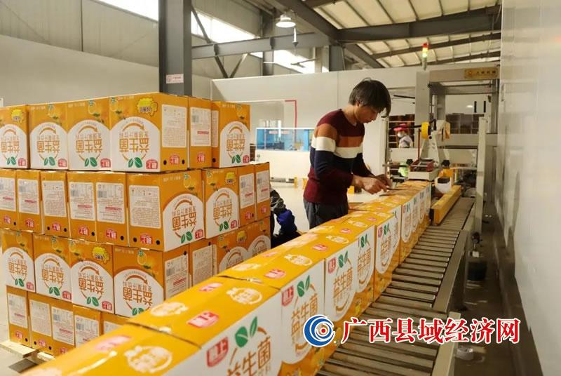 融安县:金桔深加工产品加紧赶货供应年货市场