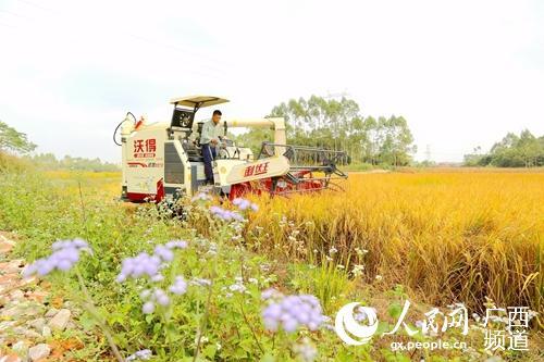 """港南区:村集体经济收入和农民增收""""双促进"""""""