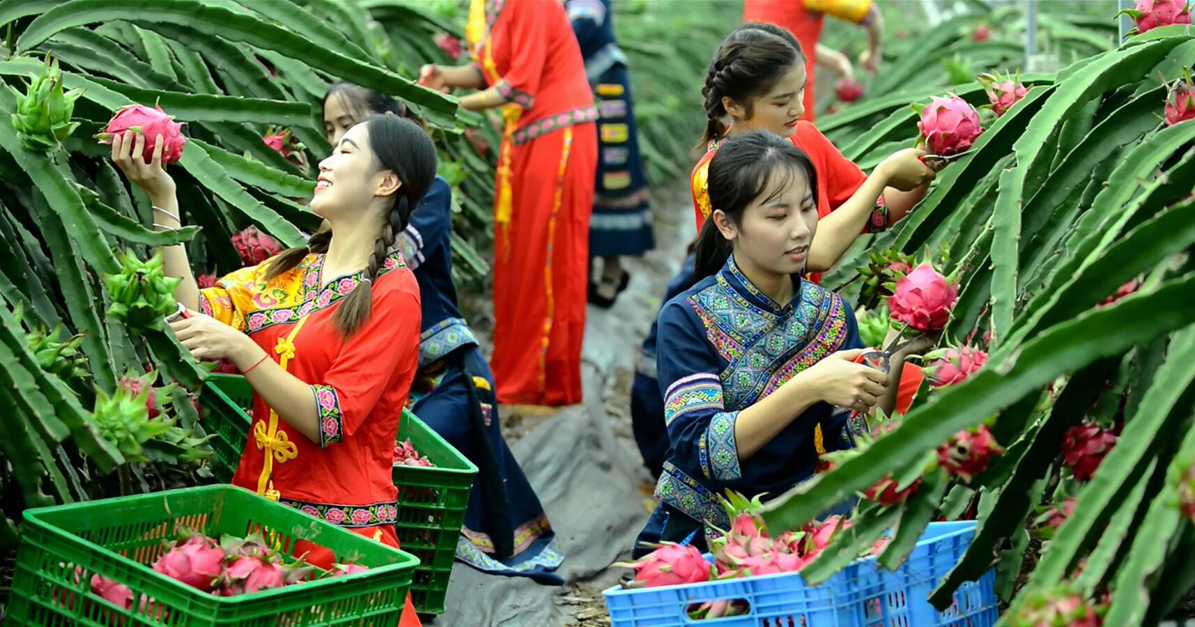 """隆安县:获评""""2019年度广西高质量发展进步县"""""""