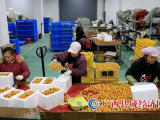 融安县:电子商务拓宽销售渠道