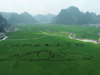 东兰县:新型农业主体托起群众致富梦