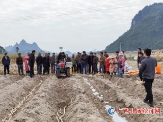 """南丹县:推广糖料蔗良种良法技术 发展""""甜蜜""""产业"""