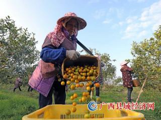 """""""融安金桔""""荣获国家农产品地理标志登记证书"""