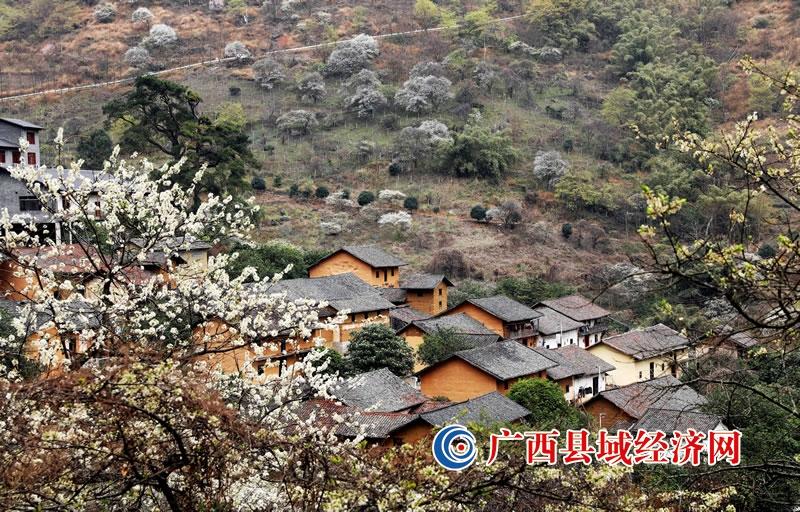 广西融安:美丽乡村引客来