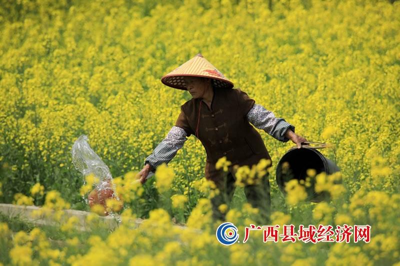 融安县:春回大地农事忙