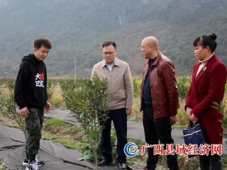 融安县:现代化智慧农业助力乡村振兴