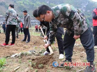 东兰县长江镇开展花椒种植和农田水利维护工作