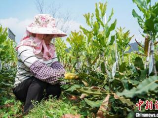 广西林业总产值跃居全国第二