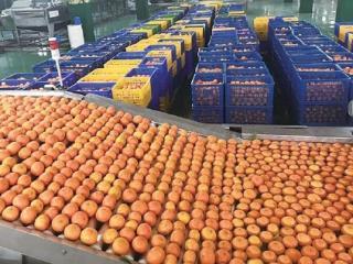 三年四大步 广西打造千亿果业实现高质量跨越发展