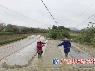 广西融安:水稻育秧忙
