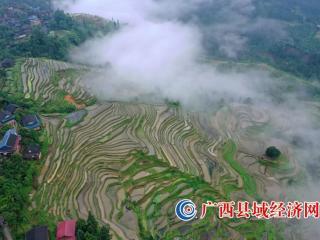 广西融水:雨后梯田景色美