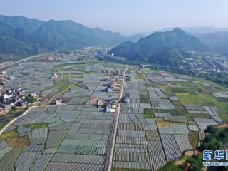 广西:走好生态脱贫路 让荒山披绿穷岭生金
