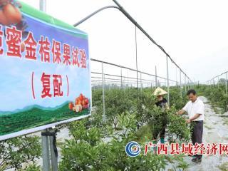 融安县:把金桔科研写在大地上