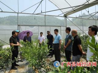 广西现代种业发展专题调研组到融安县调研