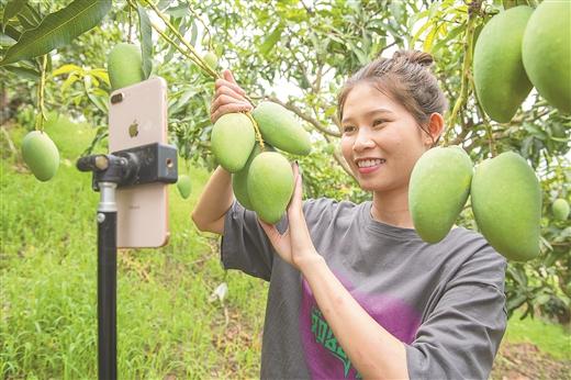 田东县:把芒果产业做优做强
