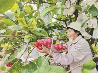 九大行动!广西加快向现代特色农业强区跨越