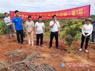 宁明县东安乡:开展实用技术培训  助力坚果产业发展