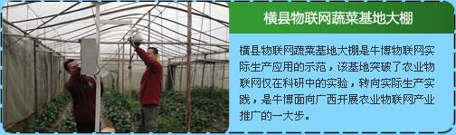 横县物联网蔬菜基地大棚