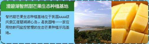 澄碧湖智然甜芒果生态种植基地