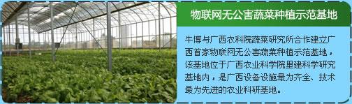 物联网无公害蔬菜种植示范基地