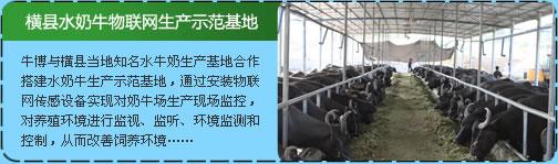 横县水奶牛物联网生产示范基地
